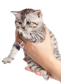 kitten on a white background. - PhotoDune Item for Sale
