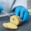 Food Safety Inspector in Laboratory, Searching for Presence of Nitrates in Potatoes - PhotoDune Item for Sale
