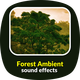 Forest Ambient Sounds