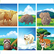 Collection - Animal Life - GraphicRiver Item for Sale