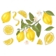 Hand Drawn Lemons Collection - GraphicRiver Item for Sale