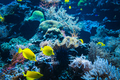 Tropical Fish on a coral reef. colourfull fishes in dark deep blue water - PhotoDune Item for Sale