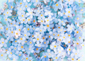 Blue Tender Background of Fresh Flowers - PhotoDune Item for Sale