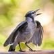 Morning Bird Twitter
