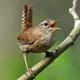 Forest Birds Chirping