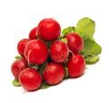 Fresh red radish isolated on white background - PhotoDune Item for Sale
