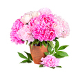 Bright bouquet of beauty peonies - PhotoDune Item for Sale