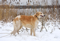 Beautiful dog - PhotoDune Item for Sale