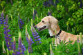 Beautiful dog - PhotoDune Item for Sale
