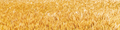 Sunny golden wheat field - PhotoDune Item for Sale