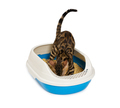 Kitten using litter box with wood pellet for pooping or urinate. - PhotoDune Item for Sale