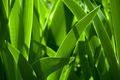 Green grass blur in the background of bright sunlight from the back - PhotoDune Item for Sale