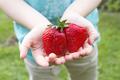 Giant ripe strawberry - PhotoDune Item for Sale