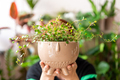 Florist woman holds a plant in a pot. - PhotoDune Item for Sale