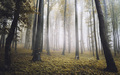 Magical autumn forest with fog - PhotoDune Item for Sale