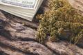 dried cannabis medical marijuana with dollar bill - PhotoDune Item for Sale