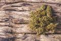 dried cannabis medical marijuana - PhotoDune Item for Sale