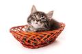 Cute little kitten in wicker basket on white background - PhotoDune Item for Sale