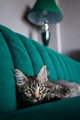 Funny kitten at home. cat laying on a bed - PhotoDune Item for Sale