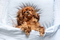 Funny dog sleeping on the pillow - PhotoDune Item for Sale