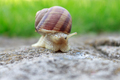Snail animal life in nature on the green grass. - PhotoDune Item for Sale
