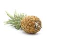 Fresh Whole Pineapple - PhotoDune Item for Sale