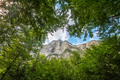 Forest and trees in the mountain landscape - PhotoDune Item for Sale