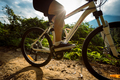 Cycling on sunrise summer forest trail - PhotoDune Item for Sale