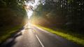 Wet asphalt road in forest against the sun. - PhotoDune Item for Sale