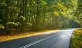 Asphalt road in a forest after rain with sun rays. - PhotoDune Item for Sale