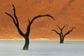 Dead camelthorn trees, Acacia erioloba, in a desert landscape - PhotoDune Item for Sale