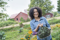 A woman carrying a basket of freshly harvested curly green leaves, vegetables - PhotoDune Item for Sale