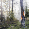A controlled forest burn set to encourage regrowth and a more sustainable forest ecosystem - PhotoDune Item for Sale