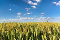 Countryside landscape, blue sky over the field - PhotoDune Item for Sale