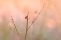 Ladybug on the twig - PhotoDune Item for Sale
