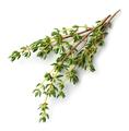 fresh thyme on white background - PhotoDune Item for Sale