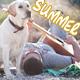Summer Holiday Background Pop