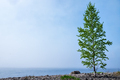 Birch and rocks on beach of Ladoga lake in Russia with mist - PhotoDune Item for Sale