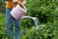 watering flowers using can in garden. No face view. - PhotoDune Item for Sale