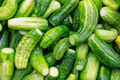 The natural green cucumber background - PhotoDune Item for Sale