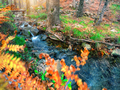 Roll on the mountain river in the autumn forest - PhotoDune Item for Sale