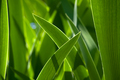 Green grass in background of bright sunlight from the back - PhotoDune Item for Sale