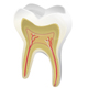 Human tooth - GraphicRiver Item for Sale