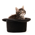 Little kitten sitting in a hat isolated on white background - PhotoDune Item for Sale