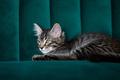 Kitten lying on the green sofa - PhotoDune Item for Sale