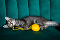 kitten plays with a ball of thread - PhotoDune Item for Sale