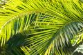 Tropical palm tree - PhotoDune Item for Sale