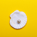 Sea shell with pearl - PhotoDune Item for Sale