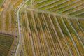Aerial view of a vineyard plantation in late afternoon lights in Europe. Drone shot - PhotoDune Item for Sale
