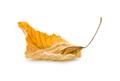 Yellow autumn leaf - PhotoDune Item for Sale
